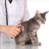 Ветеринарные клиники в Иделе